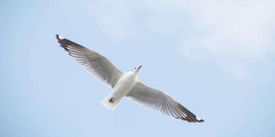 被鸟粪砸中会不会感染H7N9?